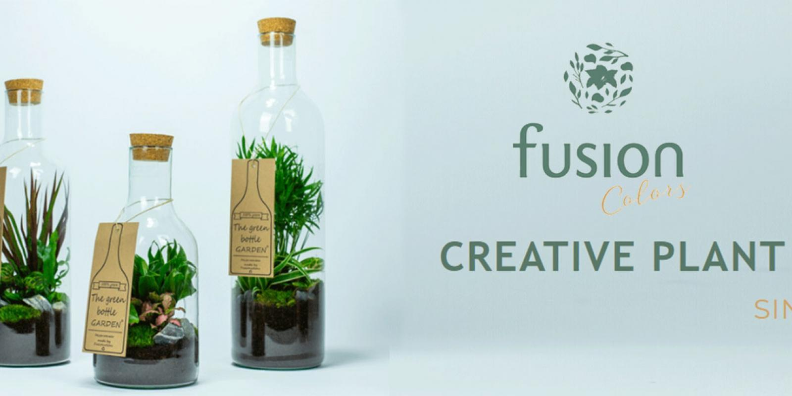 Roobos wholesale for flowers and plants: Our Fusion Colors grower
